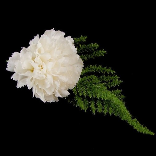 Carnation Buttonhole Ivory (2 Pack)