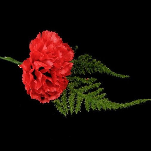 Carnation Buttonhole Red (2 Pack)