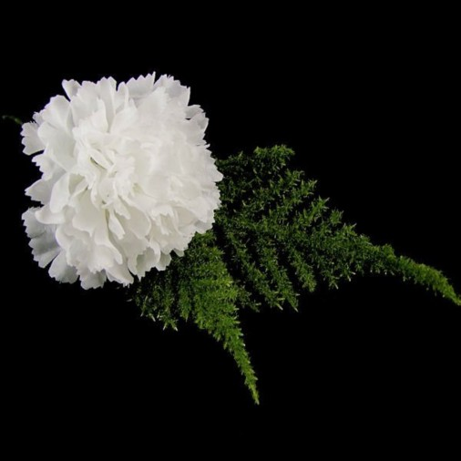 Carnation Buttonhole White (2 Pack)